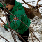 Un carabiniere forestale soccorre un cervo bloccato dalla neve ad Acquasanta Terme