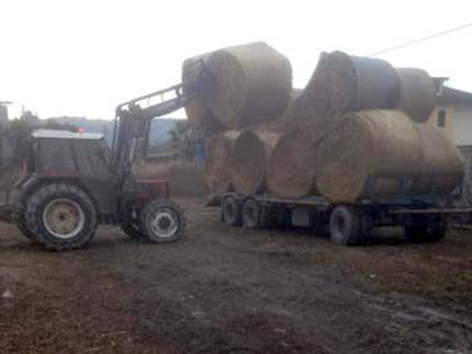 Le donazioni di fieno per gli agricoltori terremotati da parte della CIA