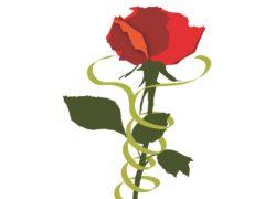 """Rosa simbolo del festival """"La Milanesiana"""""""