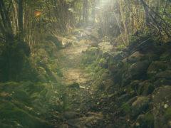 Foresta, bosco, natura